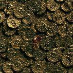 Новый исторический рекорд цены на золото